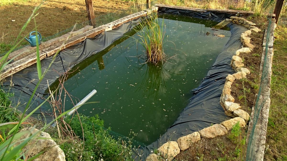 Le bassin des tortues.