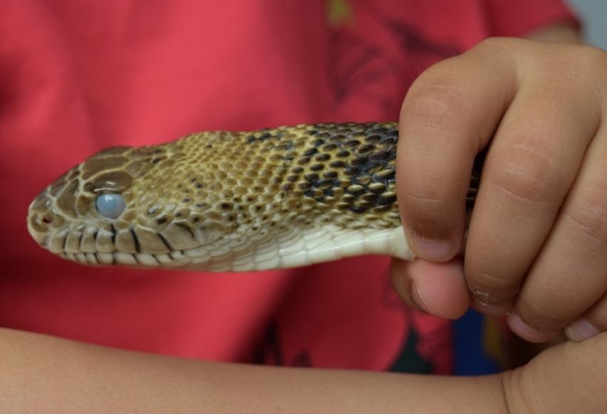 Animation reptiles à l'école maternelle Dartein de Longwy