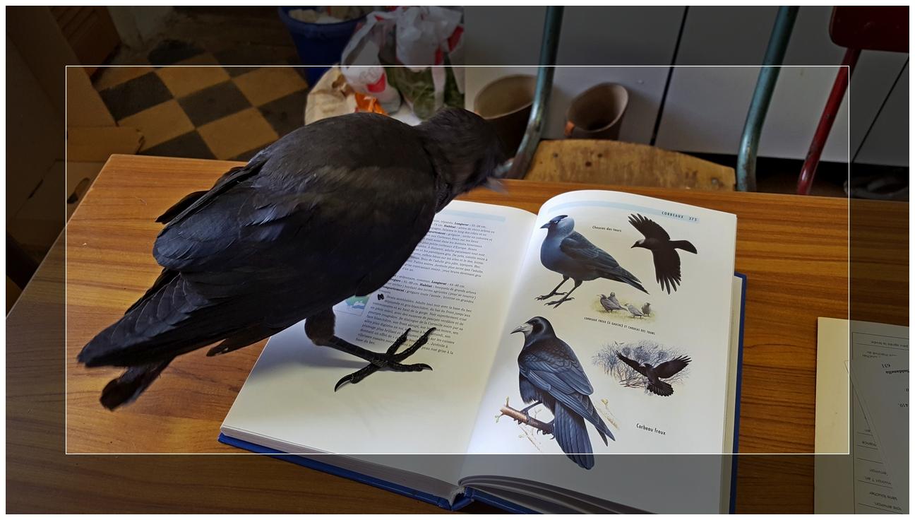 Maître Corbeau sur un livre penché....
