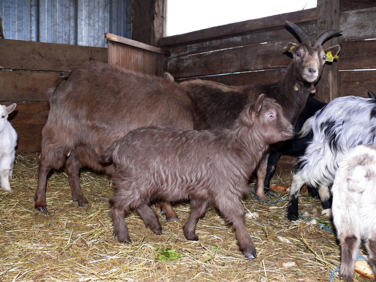 Martine à la ferme.