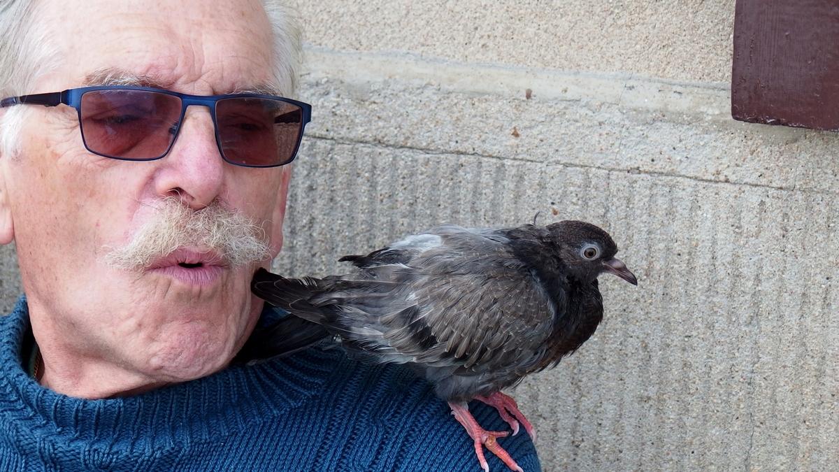 Petit pigeonneau qui prend ses aises.